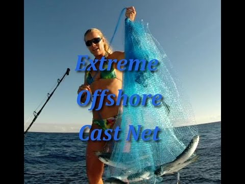 Big Mullet Offshore Fishing GOPRO Video Clip