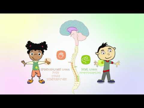 How we process sensory information