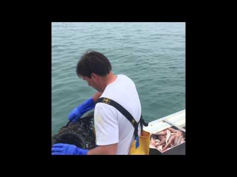 Lobster Fishing Jersey Channel Island