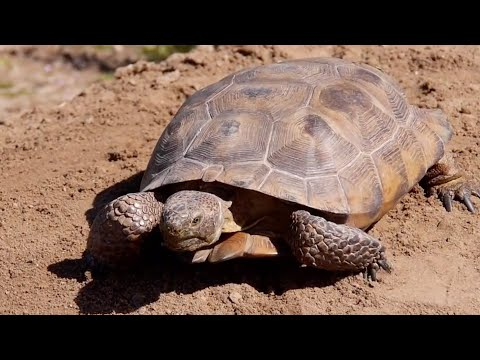 HOW TO MAKE A TORTOISE SHELTER