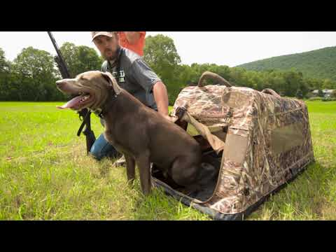 Pre-Season Dog Training | Cabela's Northern Flight