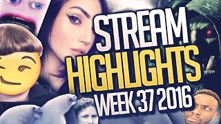 SEAL SEX, CHUBBY GINGERS AND BURPING QUEEFS - Stream Highlights Week 37 2016