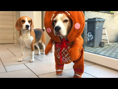 Funny Dog Costumes : Cute Dogs Louie and Marie
