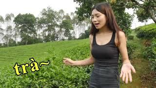 【玩越南】從今天起叫我茶公主 Công chúa vườn trà