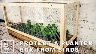 Protect A Planter Box From Hungry Birds