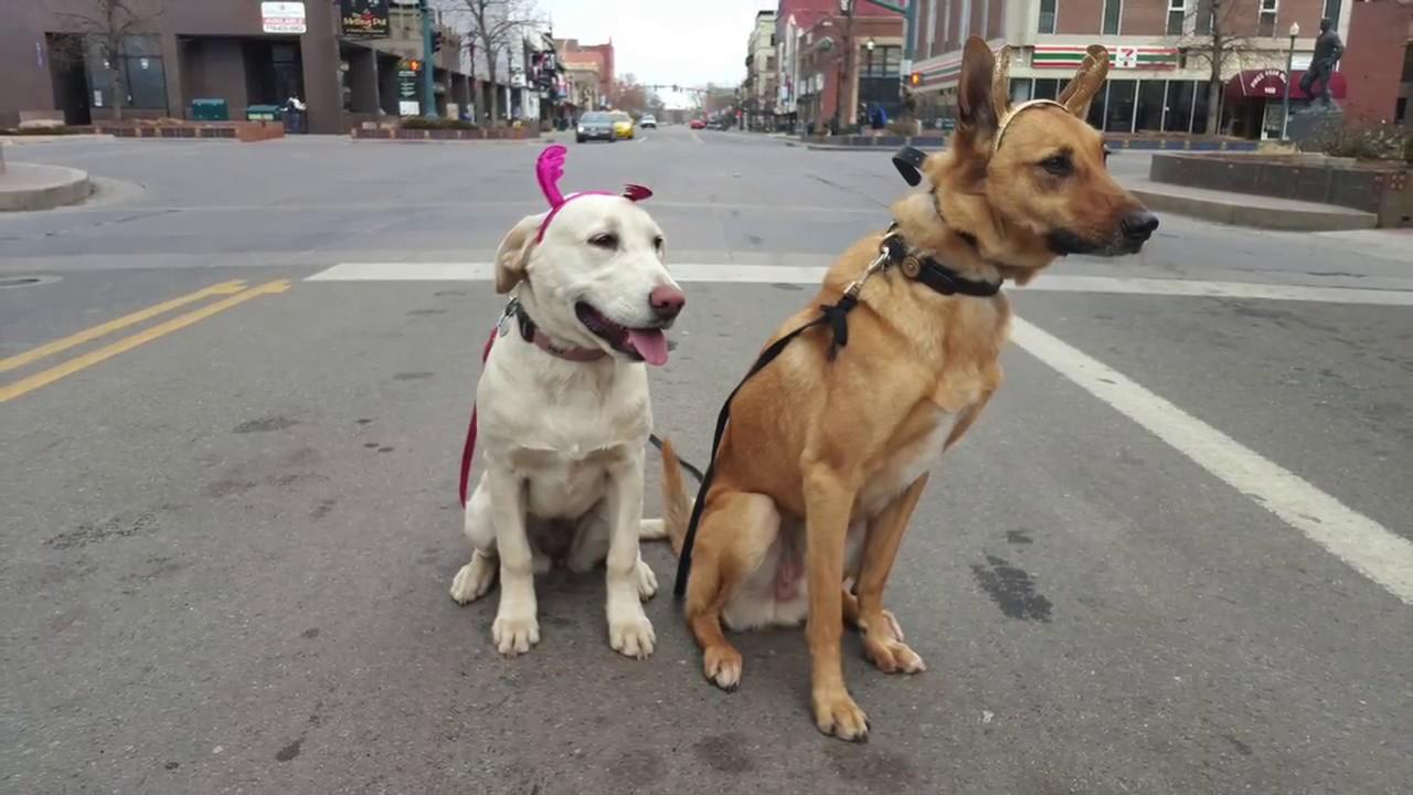 7 Month Old Golden Retriever Labrador Mix Maui Best Dog Trainers