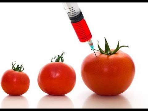 Monsanto GMO process