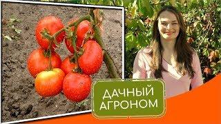 видео Ответы о выращивании томатов в открытом грунте