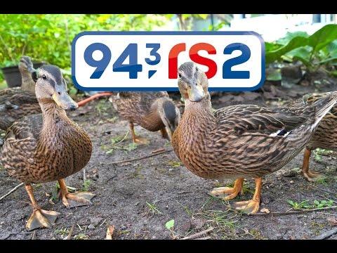 Radiobeitrag vom 25 August 2015 auf 94,3 rs2  Berliner Rundfunk