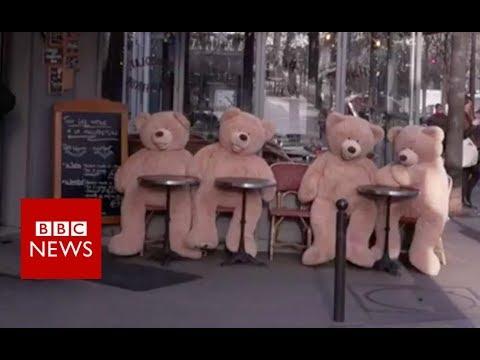 The bears bringing