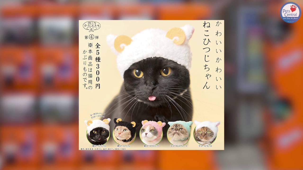 Gachapon Cat Hat Pets Central