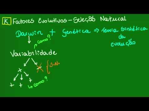 Teoria Sintética Da Evolução - Evolução - Biologia