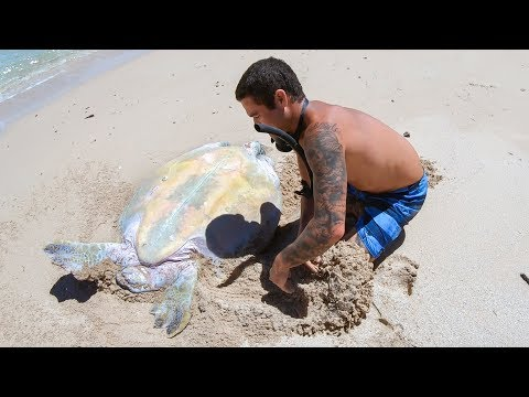 YBS Lifestyle Ep 29 - HELPLESS TURTLE GETS RESCUED  | Crayfish Catch And Cook