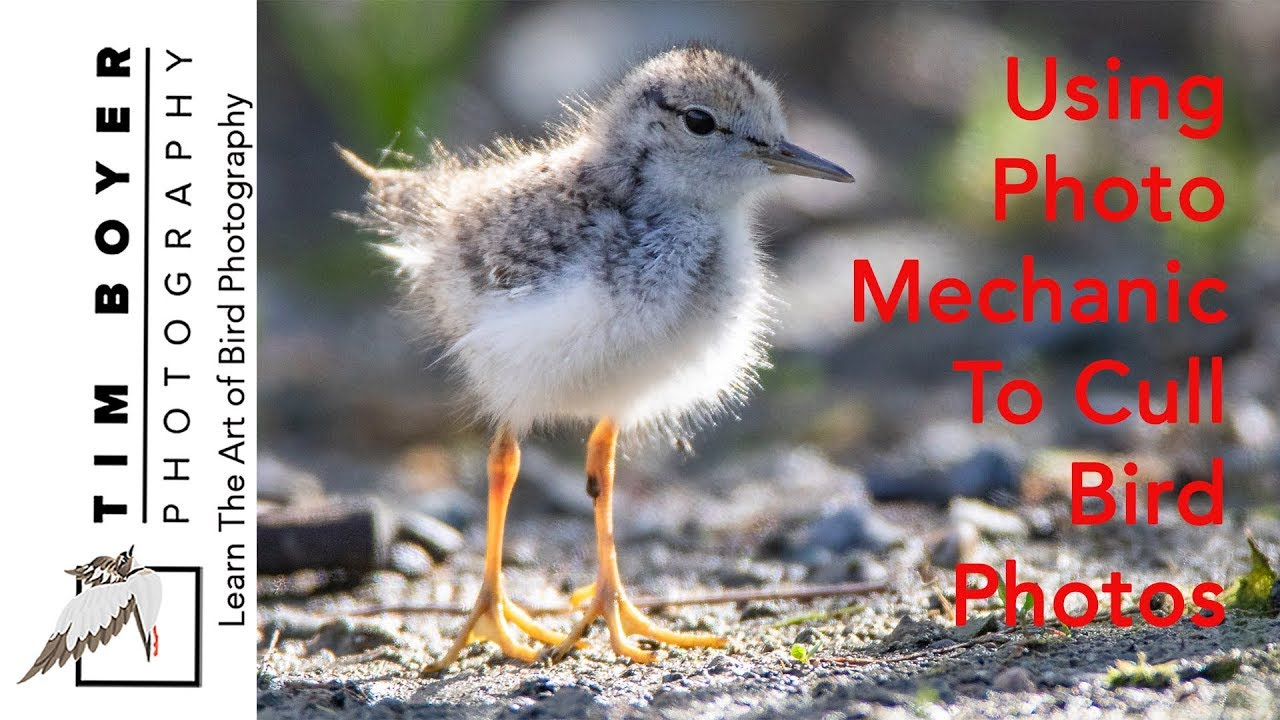 Using Photo Mechanic to Cull Bird Photos — Tim Boyer Photography