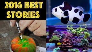 Best Aquarium Stories of 2016!