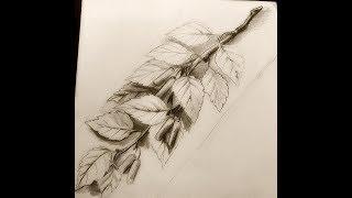 Рисунок для резьбы по дереву. Березовая ветка./How to draw.