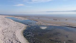 Salton Sea Desolation