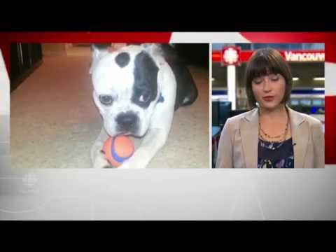 B.C. dog walker charged in deaths of 6 dogs