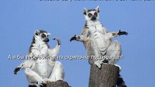 Смешные картинки про кошек и котят Выпуск №68  FUNNY CATS СМЕШНЫЕ КОШКИ