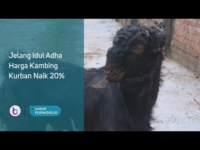 Jelang Idul Adha Harga Kambing Kurban Naik 20%