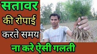 Nepali shatavari सतावर पौधा रोपड़ कार्य ||shatavari ki kheti|| ropai kaise kare||asparagus plantation thumbnail