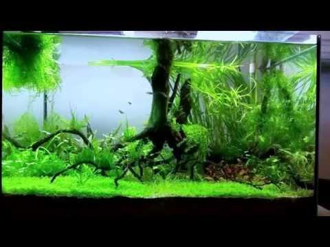 Aquarium 45 l microdevario kubotai