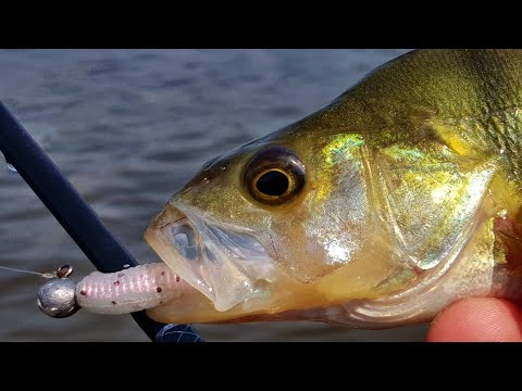 Lure Fishing At Lake Buffalo
