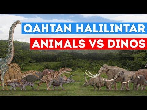 QAHTAN HALILINTAR DAILY ANIMALS VS DINOS - GENHALILINTAR 11 ANAK