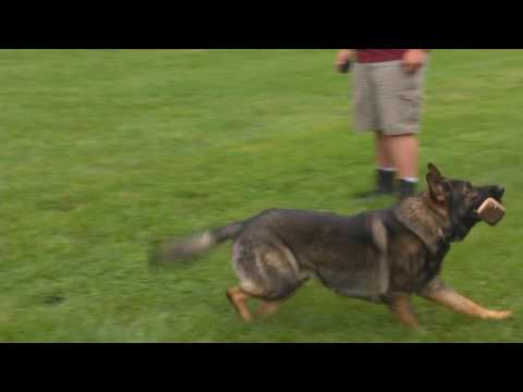The Fastest Way To Train A Dog Is Slowly by Master Trainer David Harris