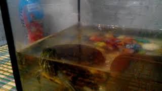 """Сериал """"Говорящая черепаха"""" серия 2"""