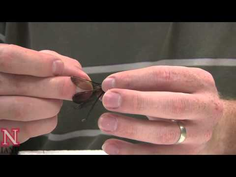 How to pin a damselfly