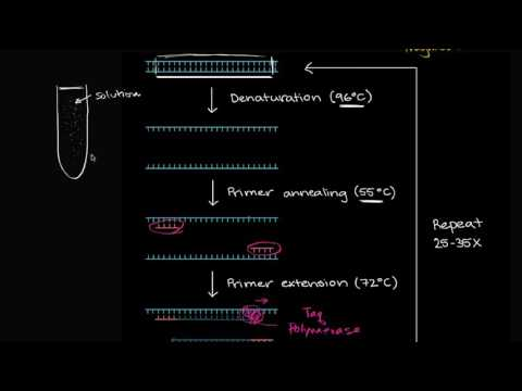 Polymerase chain reaction (PCR) | Biomolecules | MCAT | Khan