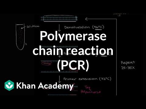 Polymerase chain reaction (PCR) | Biomolecules | MCAT | Khan Academy