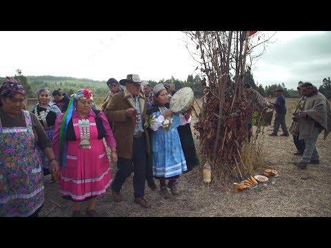 Mapuche: Saving Indigenous Language