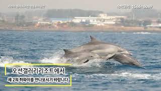 ▲오션갤러리 리조트▲제주 최고급 럭셔리리조트 신규오픈~…
