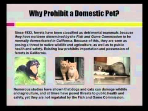 Legalize Ferrets Request To California Fish And Game Commission, Dec 16, 2010