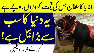 3 Million $ Bull in India Biggest in the world | Islamic Solution