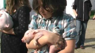 4 H pig pickup2009