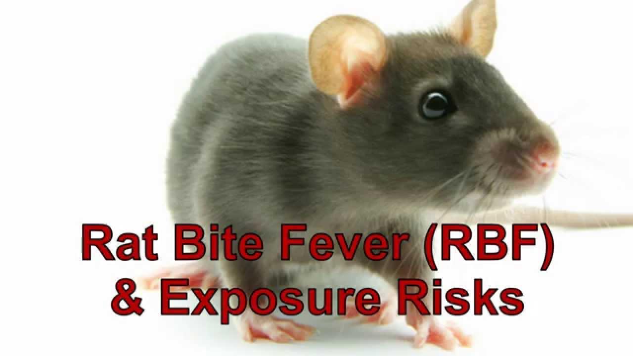 Signs and Symptoms of Rat-bite Fever | Rat-bite Fever (RBF ...