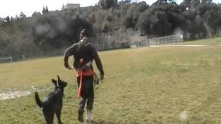 Dog Heelers Advanced Obedience Training