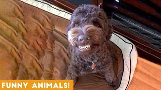 Download Funniest Pets & Animals of the Week Compilation January 2019   Funny Pet Videos Mp3 and Videos