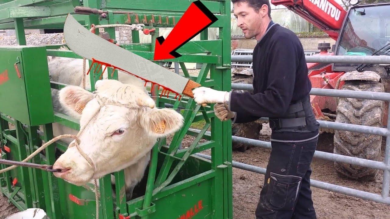इनके काम करने की स्पीड को देखकर आप भी रह जाएंगे दंग   AMAZING ANIMAL FARMING MACHINES