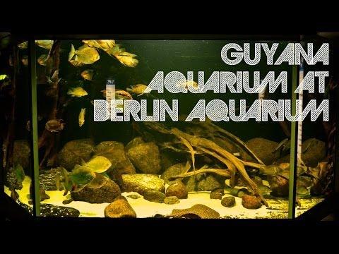 Guyana Aquarium at Berlin Aquarium
