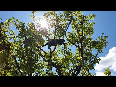 Cat Climbs To Top Of Tree