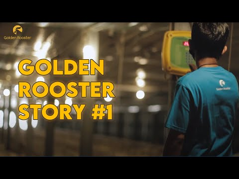 Golden Rooster Story #1