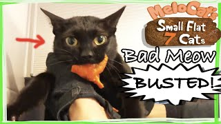 Mean Cat Stealing Food My Sneaky Cat Thief (Bad Cat Compilation)