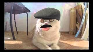 кот грузин