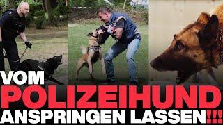 Vom Polizeihund anspringen lassen | POLIZEI Hundestaffel Berlin