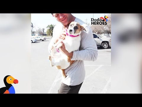 Guy Quits His Job To Focus On Making Everyone Fall In Love With Shelter Dogs   Dodo Heroes Season 1