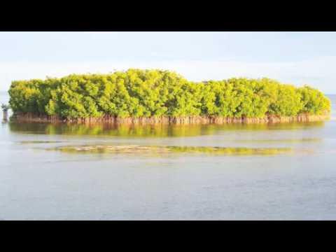 Virtual Florida Keys Geology Field Trip